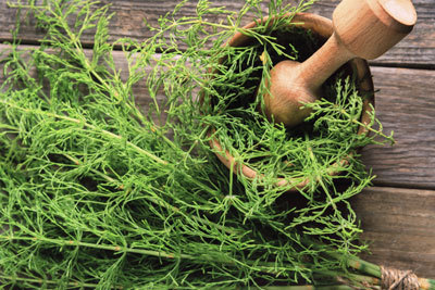 Horsetail extract as ingredient in hair products